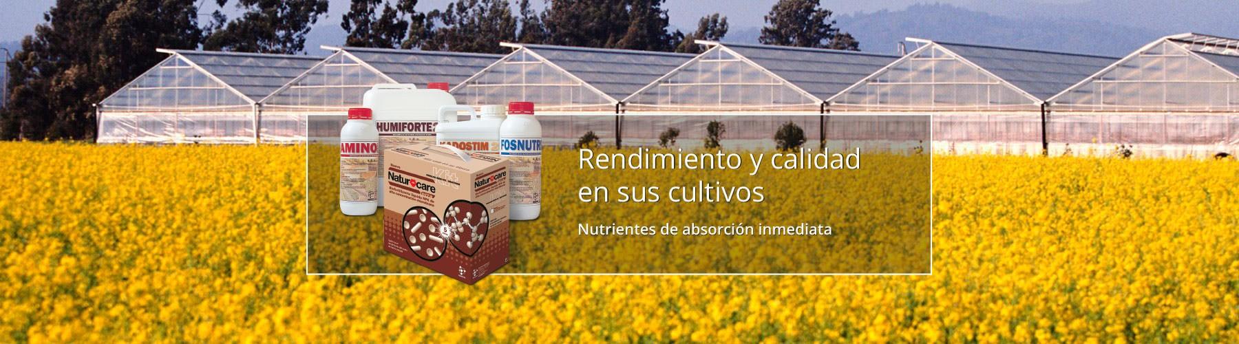 Aminoácidos de absorción inmediata para cultivos